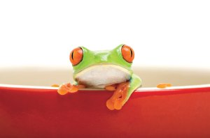 frog-fable-